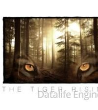 Парящий тигр (2021)