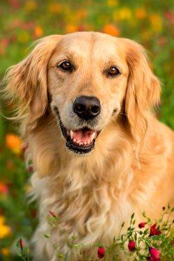 Собачья жизнь 3